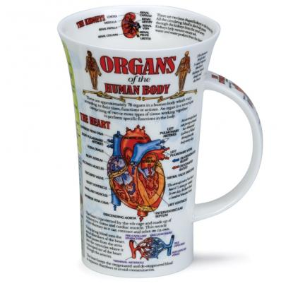 Hrnek Glencoe Organ of Human body 500 ml